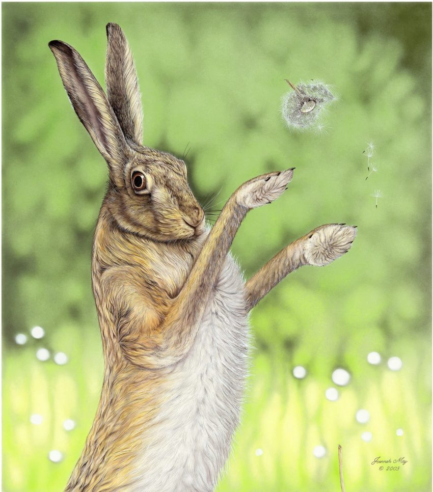 A female hare has won the boxing match and she has caught your eye! A dandelion clock kicked up in the boxing match has fallen and the seed heads are floating downwards depicting being timeless.