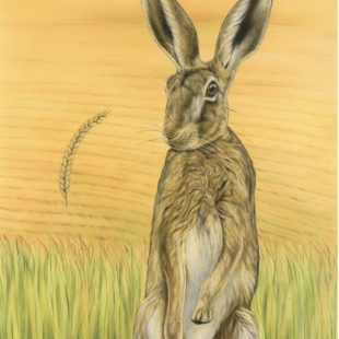 A painting titled Cornucopia. It depicts a female hare which has just won a boxing match. The corn is falling after being kicked up.