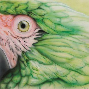 6_Green_Parrot