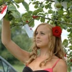 1 Amy putting the Romantic Moments on the Apple Tree