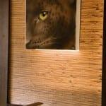 3 The small black leopard original bought by Raymond Blanc