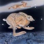 9  Gemini Hare close up