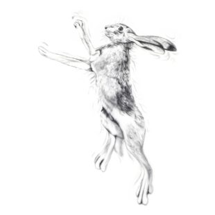 Silver Hare Male - a painting by Joanna May. Joanna uses silver paint threading through the image giving glamour and a sense of movement to the painting. This is a male hare boxing. The males are smaller than the females and their face shape is slightly narrower.
