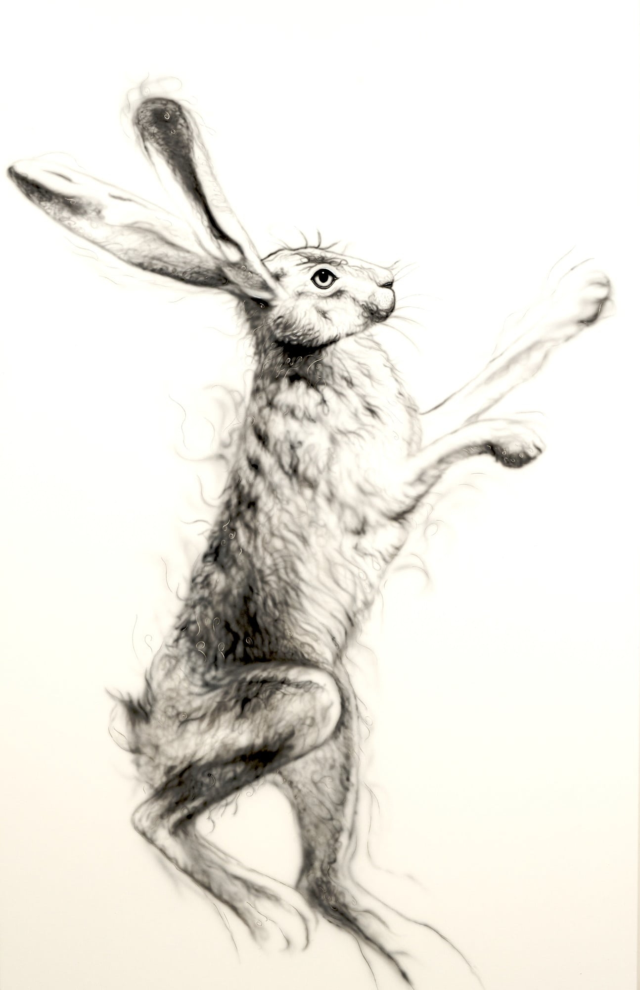 Silver Hare Female 1 a painting by Joanna May. Joanna uses silver paint threading through the image giving glamour and a sense of movement to the painting. This is a female hare boxing.