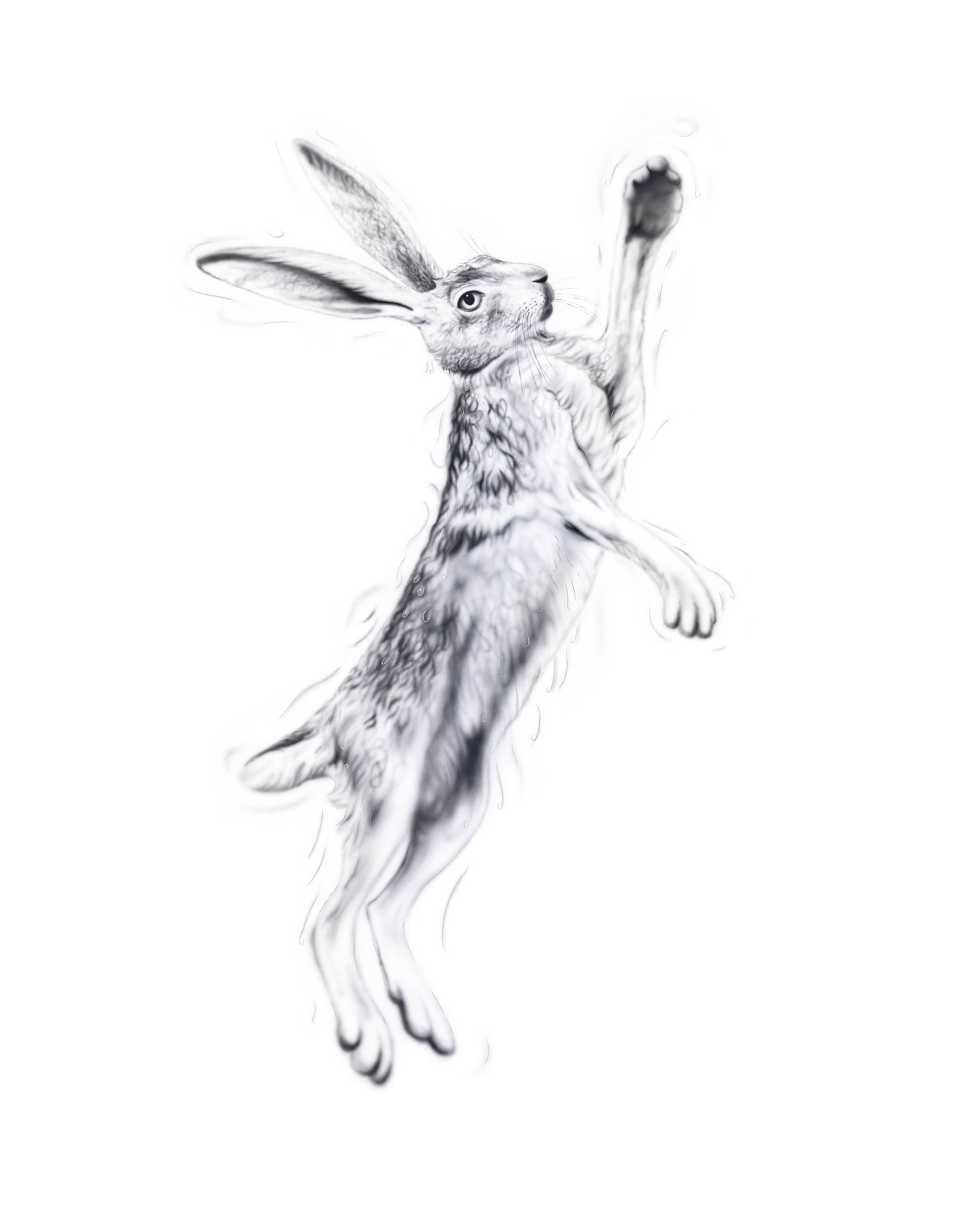 SIlver Hare female 2 - a painting by Joanna May. In this painting, Joanna uses silver paint threading through the image giving glamour and a sense of movement to the painting. This is a female hare boxing.