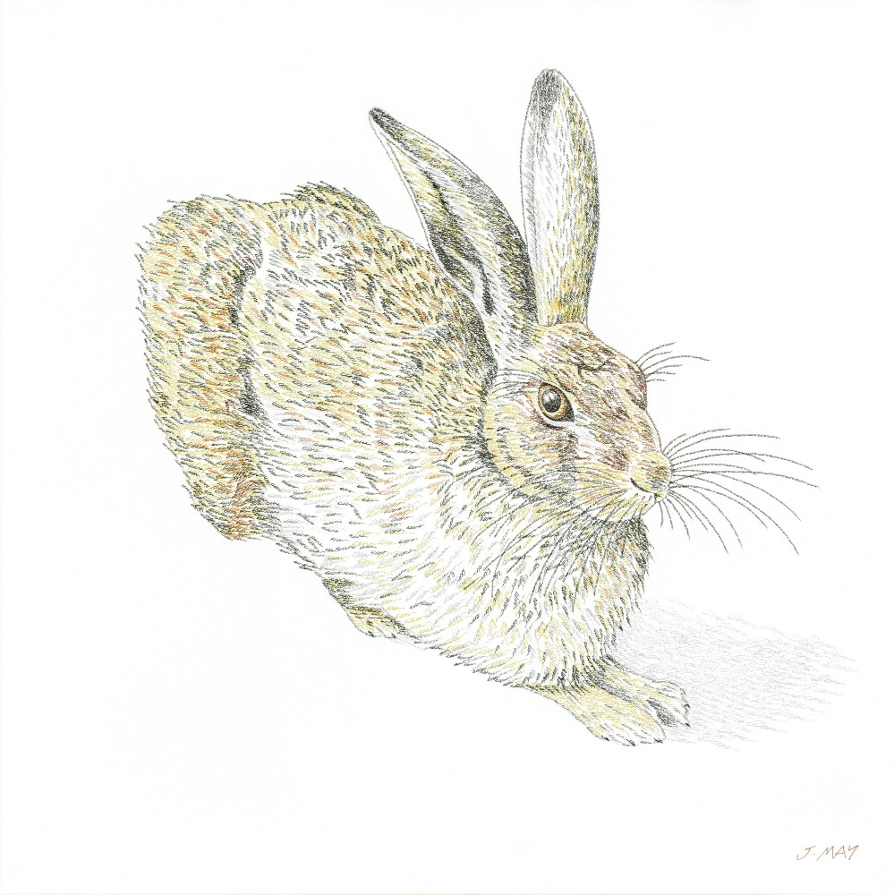 Durer Hare by Joanna May. Joaanna's version of the famous painting by German artist Albrecht Dürer in 1502 of the hare. The painting is made out of the word Durer repeated over and over again to create shading.