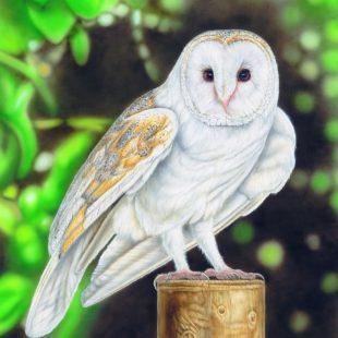 Joanna May Barn Owl