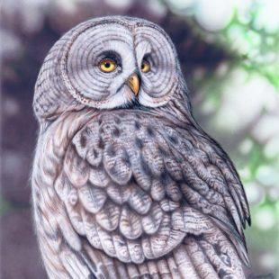 Joanna May Great Grey Owl