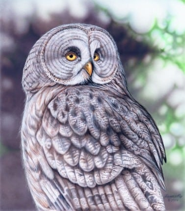 Joanna May Great Grey Owl