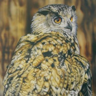 Joanna May Eagle Owl