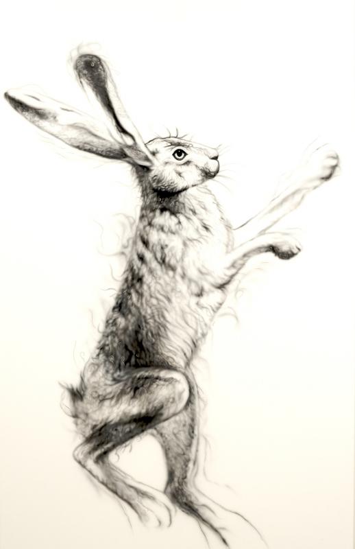 Silver Hare Female 1