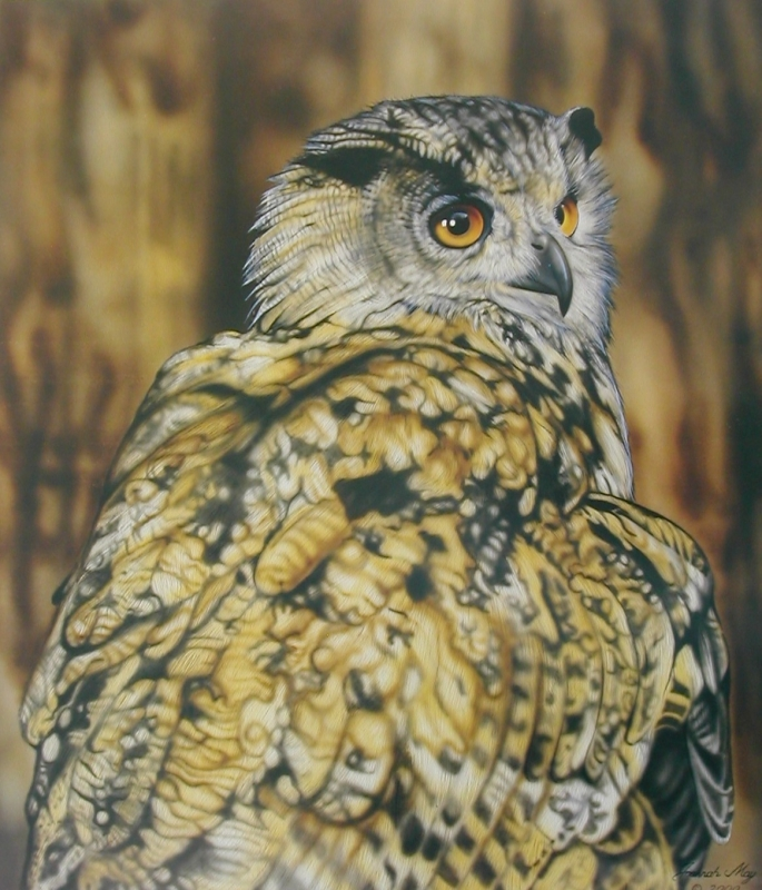 Eagle Owl - resting for a moment