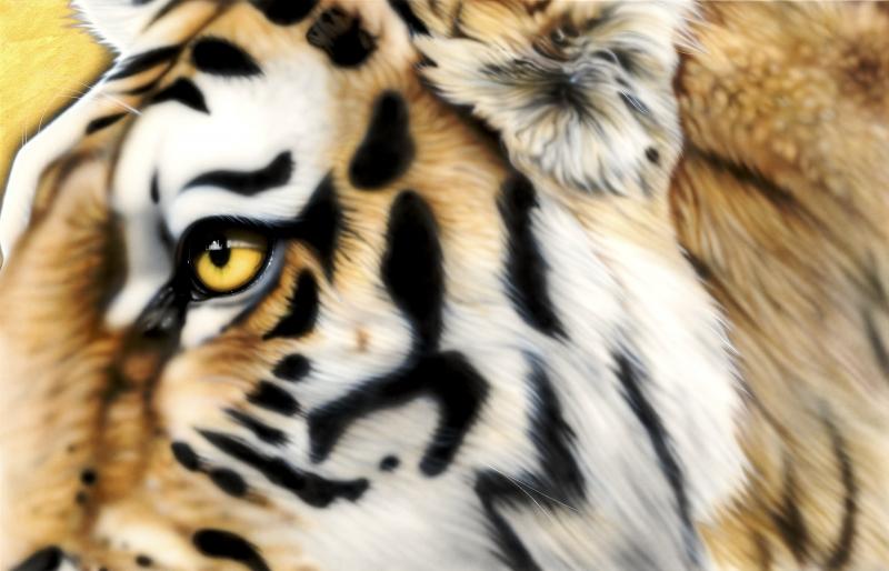 Taj Tiger