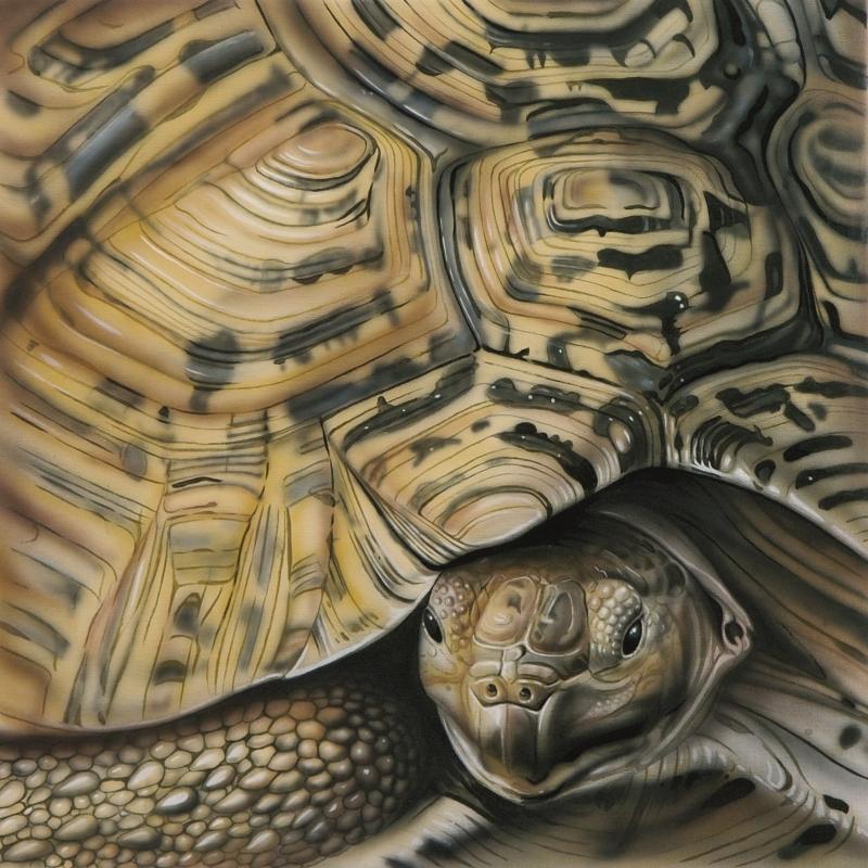 Shell - Tortoise